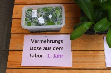 Vermehrungsdose_Orchideen_Koch