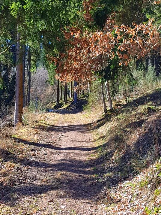 Sauerland_Wald