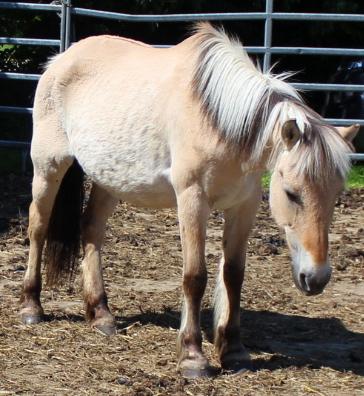 Hof Köhne Pony