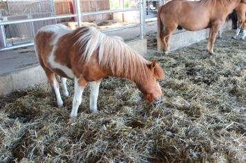 Hof Köhne Ponys