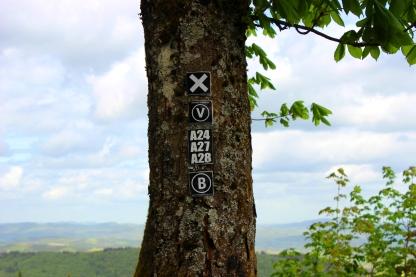 Hohe Bracht Baum