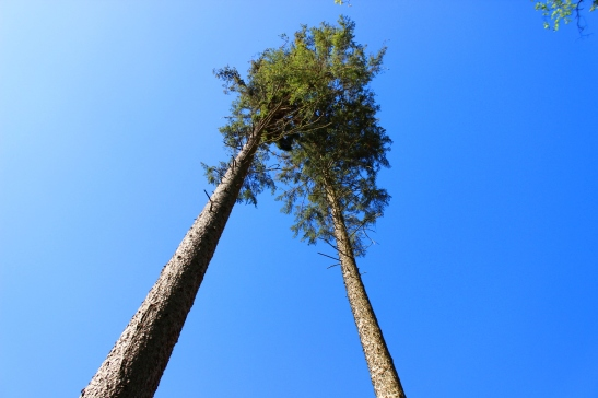 Wildwald Vosswinkel Bäume
