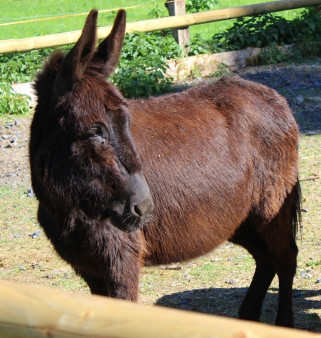 Wildwald Vosswinkel Esel 1