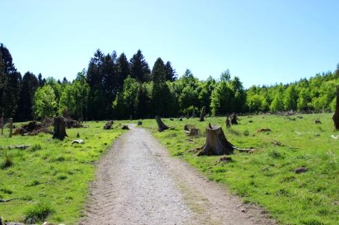 Wildwald Vosswinkel Weg