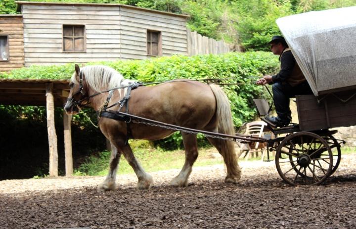 Elspe Festival Pferd