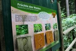 Erlebnisberg Kappe Naturerlebnispfad Früchte