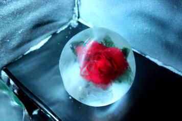 Joachim Knorra Objekteinfrierung Rose