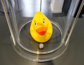Phänomenta Ente unter Druck 1