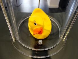 Phänomenta Ente unter Druck 2