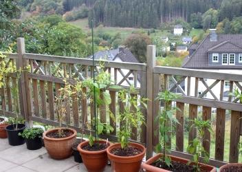 Chilimann Ralf Rickert Pflanzen Garten