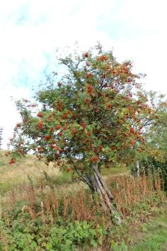 Wildewiese Natur