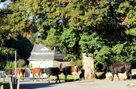 Schloss Körtlinghausen Landwirtschaft