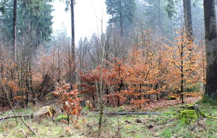 Sauerland Mischwald