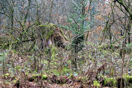 Sauerland naturnaher Mischwald