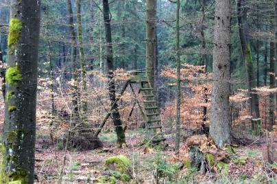Sauerland Wald Hochsitz