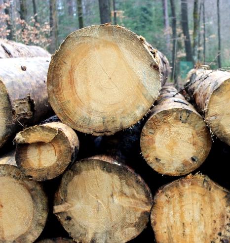 Sauerland Wald Holz