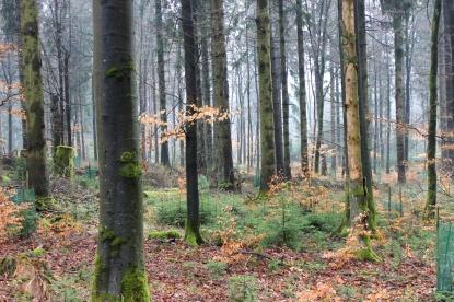Sauerland Wald Pflanzenschutz 1