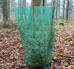 Sauerland Wald Pflanzenschutz