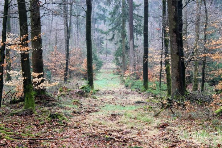 Sauerland Wald Schneise