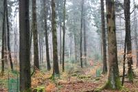 Sauerland Wald Titelbild