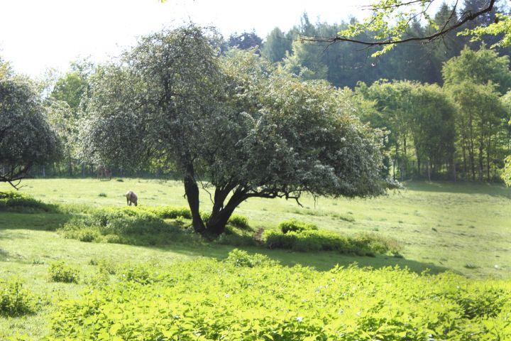Bilsteintal Bäume