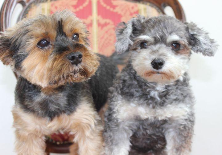 Gibby und Henry
