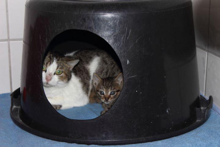 Tierheim Lippstadt Katzenbaby Höhle Mutter