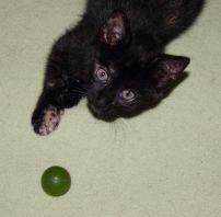 Tierheim Lippstadt Katzenbabys schwarz Ball