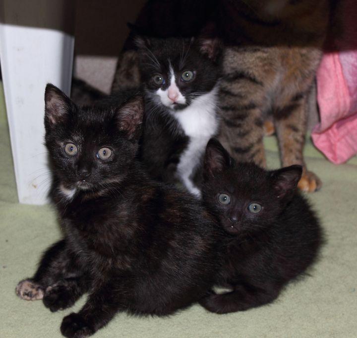 Tierheim Lippstadt Katzenbabys schwarz
