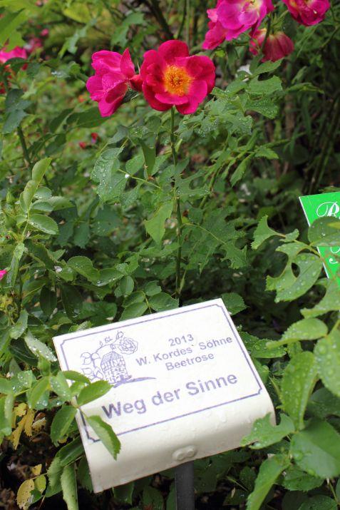 Rosendorf Assinghausen Weg der Sinne