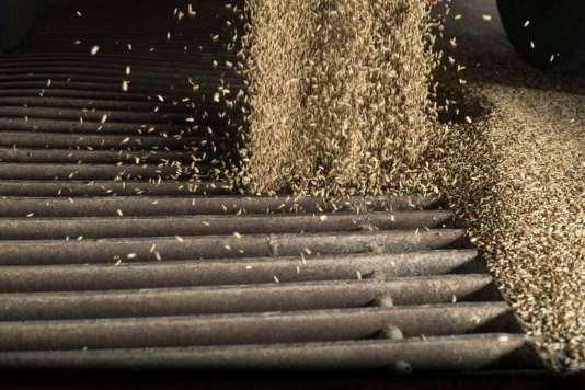 Biomühle Eiling Getreide