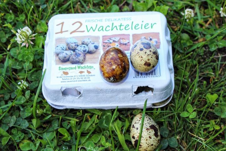 Sauerland Wachteln Wachteleier-01